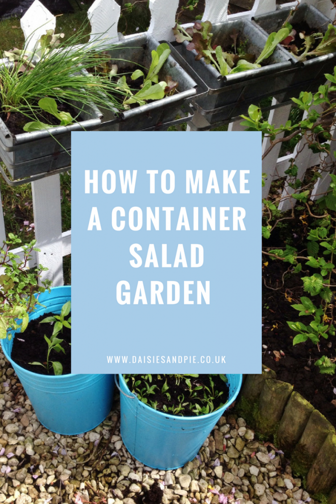 How to make a simple container salad garden, home grown salad, veg garden tips