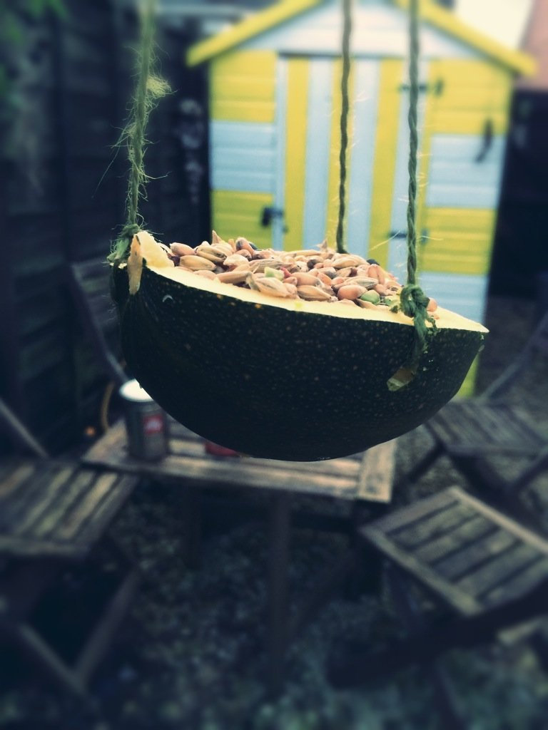 natural bird feeder make from squash hung in the garden in front of a beach hut style shed