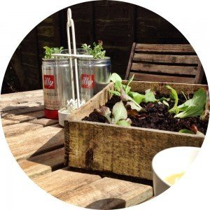 plant it grow it eat it, rocket in illy pots, illy coffee tins, how to grow salad