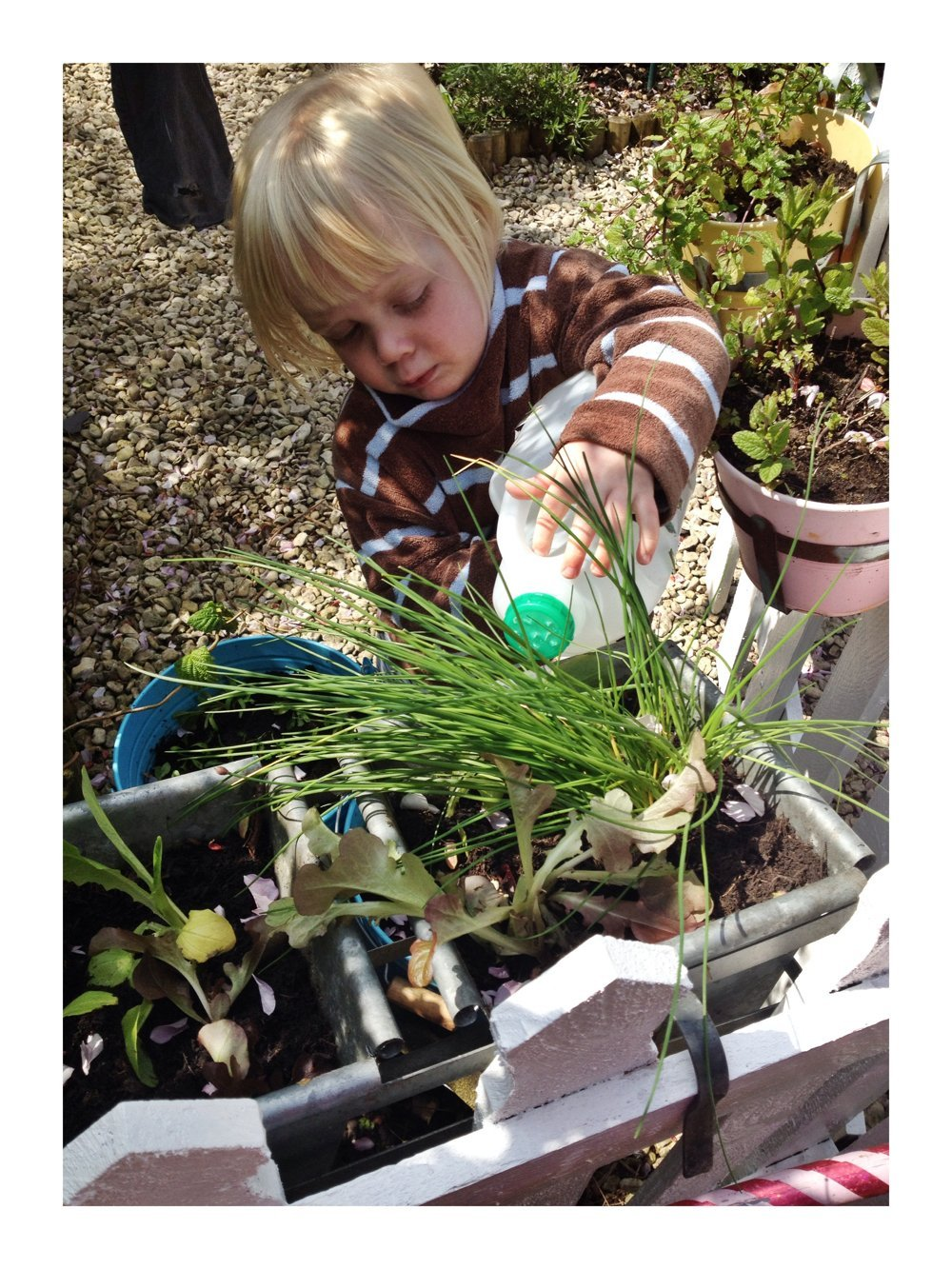 milk bottle watering can, gardening activities for kids, how to make a mini watering can