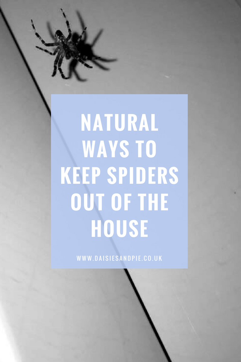 Natural ways to keep spiders out of the house daisies pie for How to keep spiders out of the house