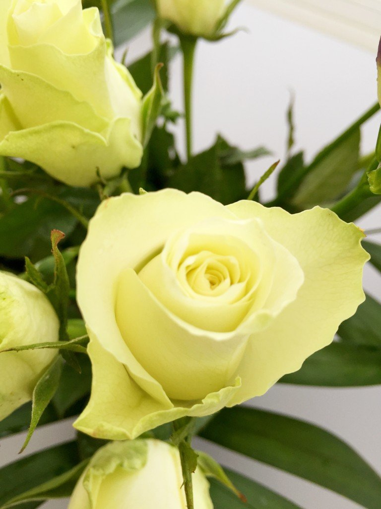 serenata flowers white roses, online flower delivery, twilight bouquet, winter flower arrangement, daisies and pie