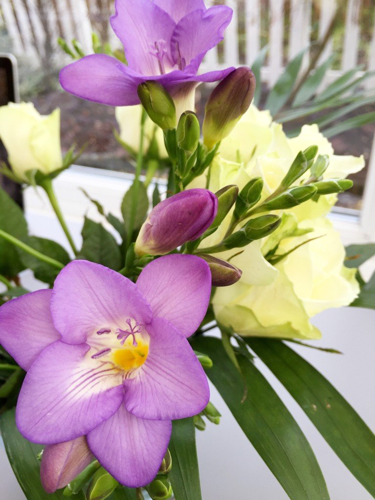 serenata flowers with blue moon freesia open, online flower delivery, winter flower bouquet, daisies and pie