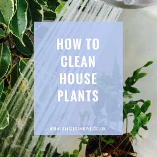 """house plants standing in a white bath being sprayed with the shower to clean them. Text overlay saying """"how to clean house plants"""""""