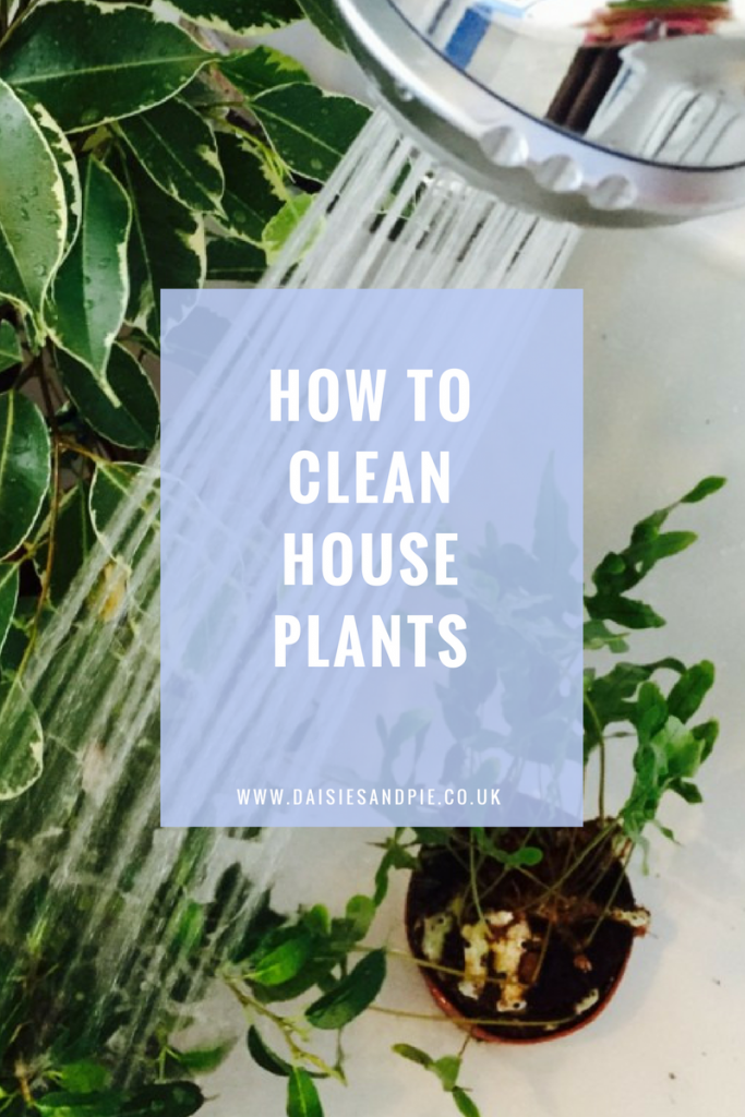 How to clean house plants, green cleaning tips