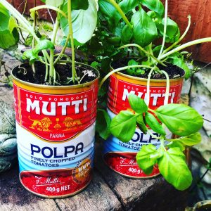 tomato tins planted up with basil plants.