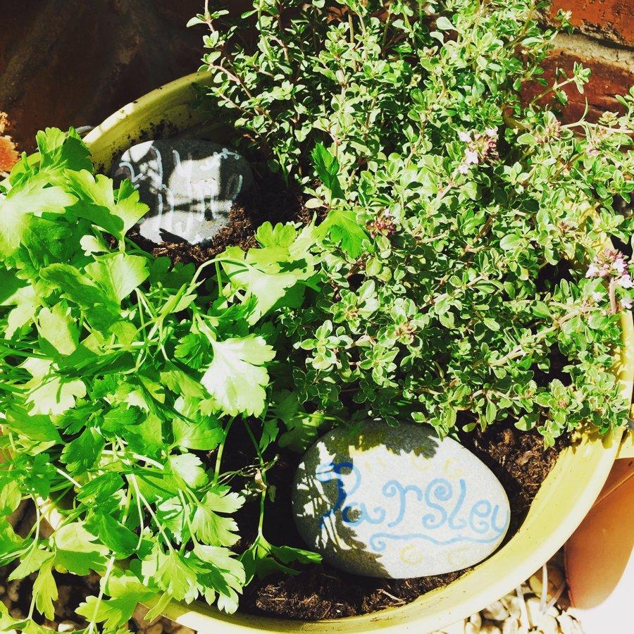 Kitchen Herb Gardens That Will Make Cooking Wonderful: Make A Kitchen Herb Garden