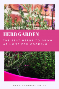 """pink plant pot filled with herbs - lavender, thyme and rosemary. Text overlay saying """"herb garden - the best herbs to grow at home for cooking"""""""