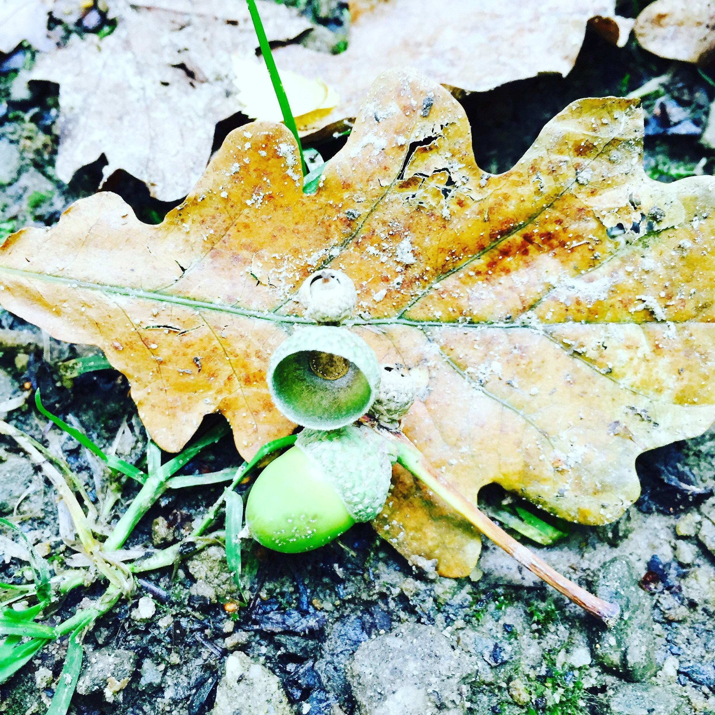 reasons to love autumn, crunchy autumn leaves, acorns, woodland walks, uk lifestyle from daisies and pie