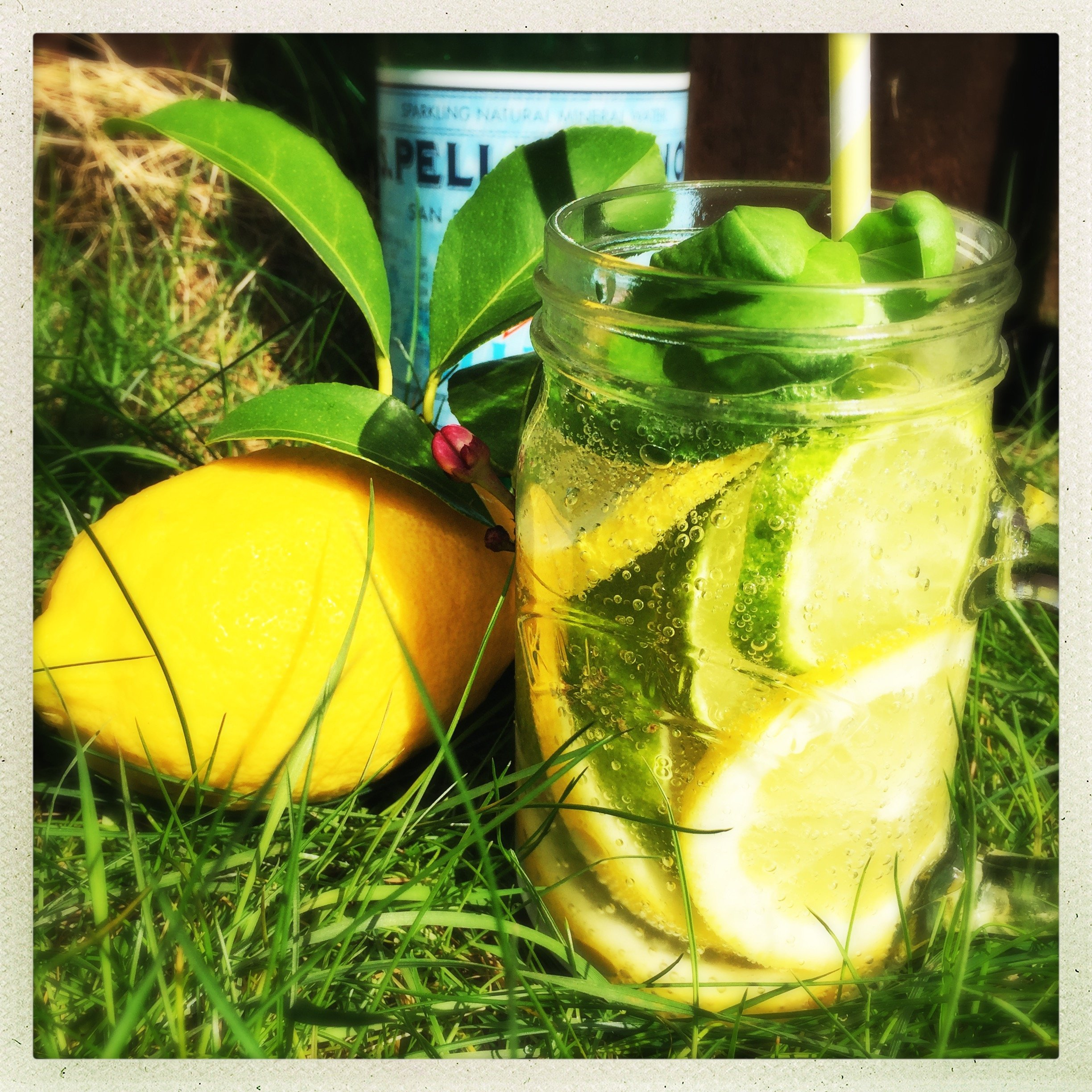 glass of infused water with lemon, limes and basil stood by fresh lemons on the grass