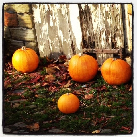 pumpkins for sale at the farm shop
