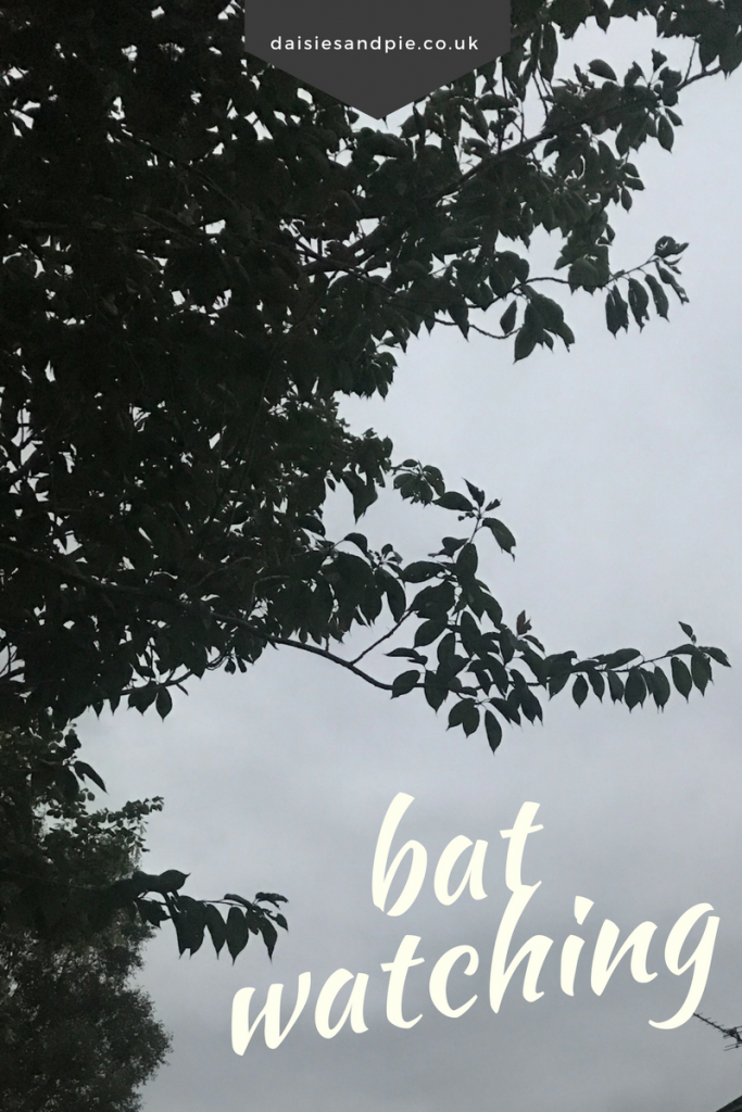Guide to bat watching, how to watch bats with the kids, wildlife friendly garden projects, uk bat watching