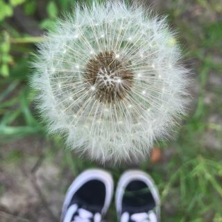 """close up of dandelion in seed - one-o'clock - with trainers in the back ground. Text overlay saying """"summer self care ideas"""""""
