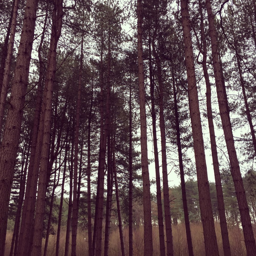 the tree canopy at Delamere Forest
