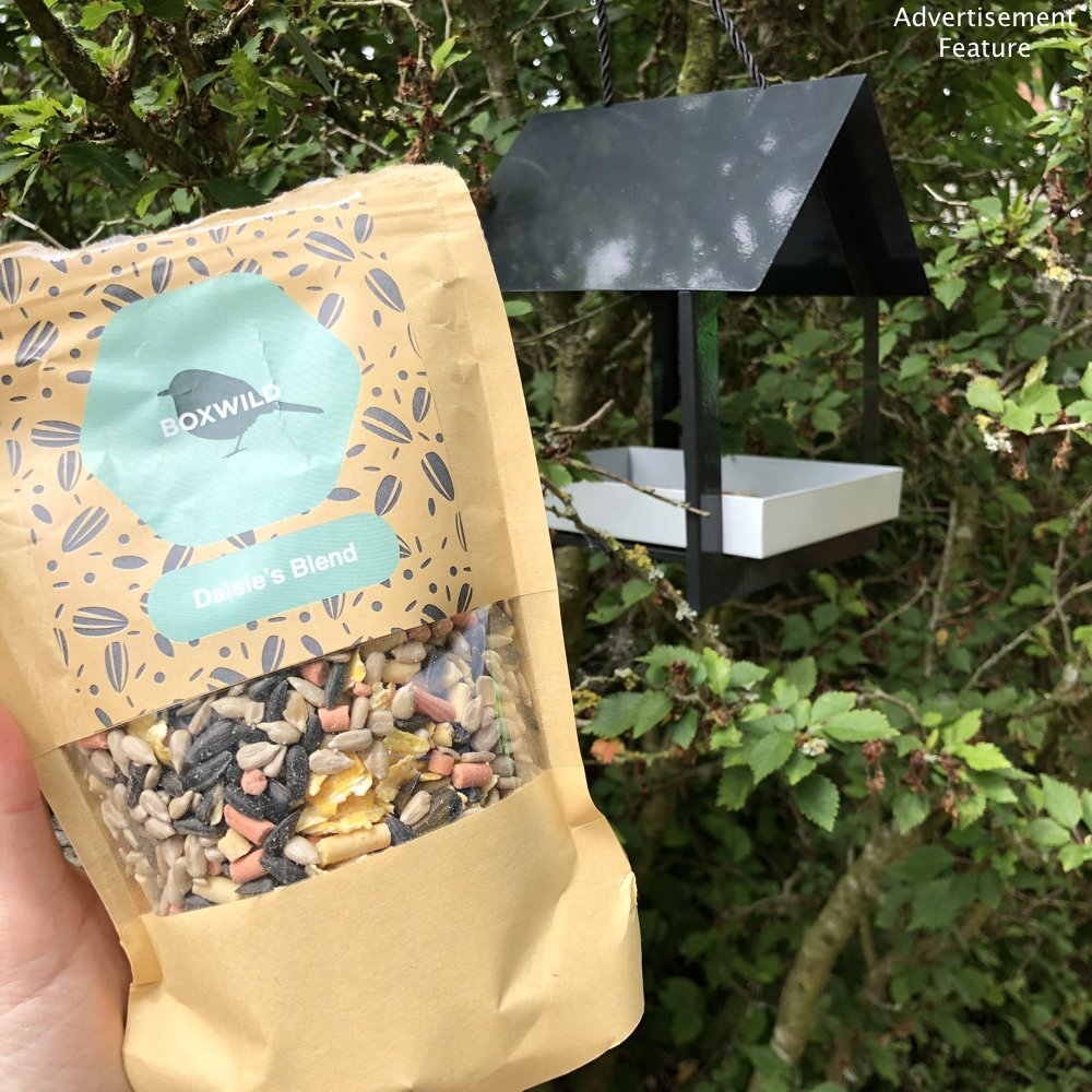Boxwild modern black and white bird house feeder hung in the trees alongside pack of personalised luxury hand blended bird seed