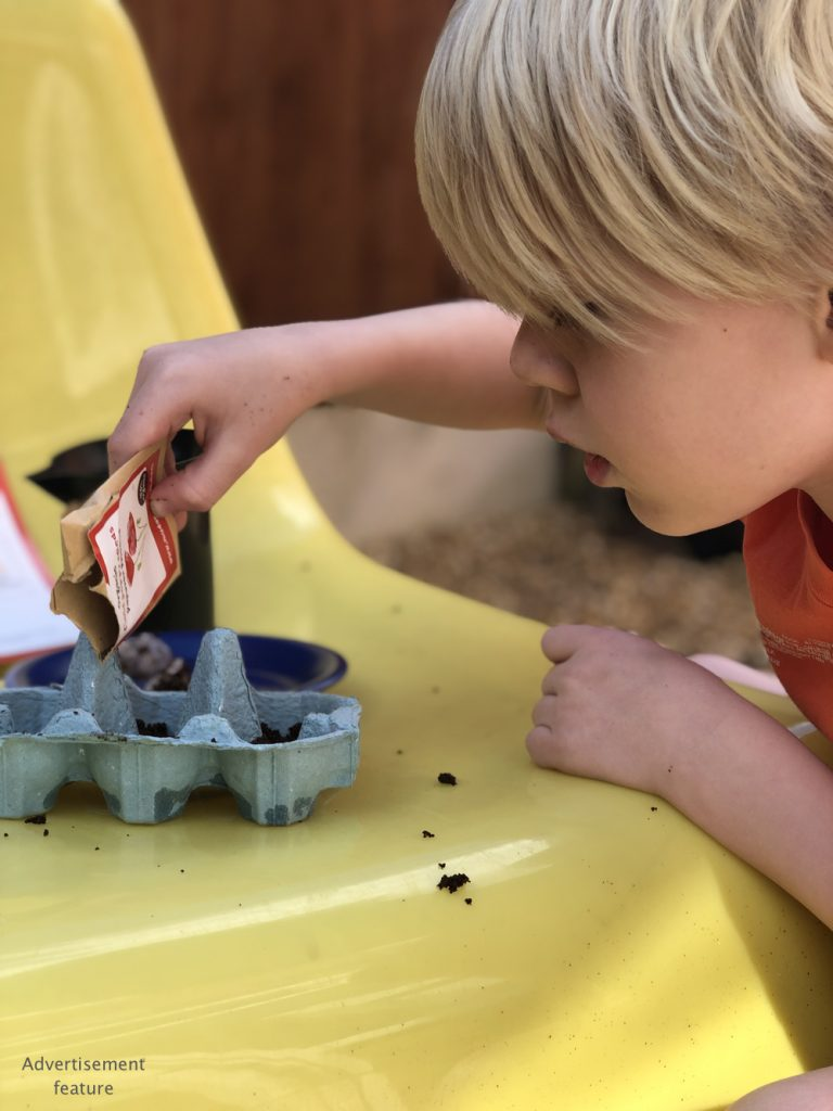 young boy planting poppy seeds in the garden