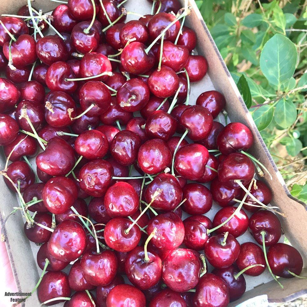box of fresh cherries