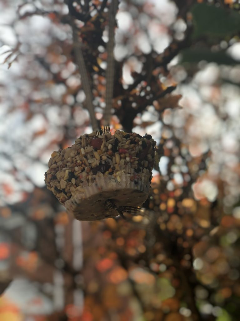 homemade fat ball on a ribbon hanging from bare branches