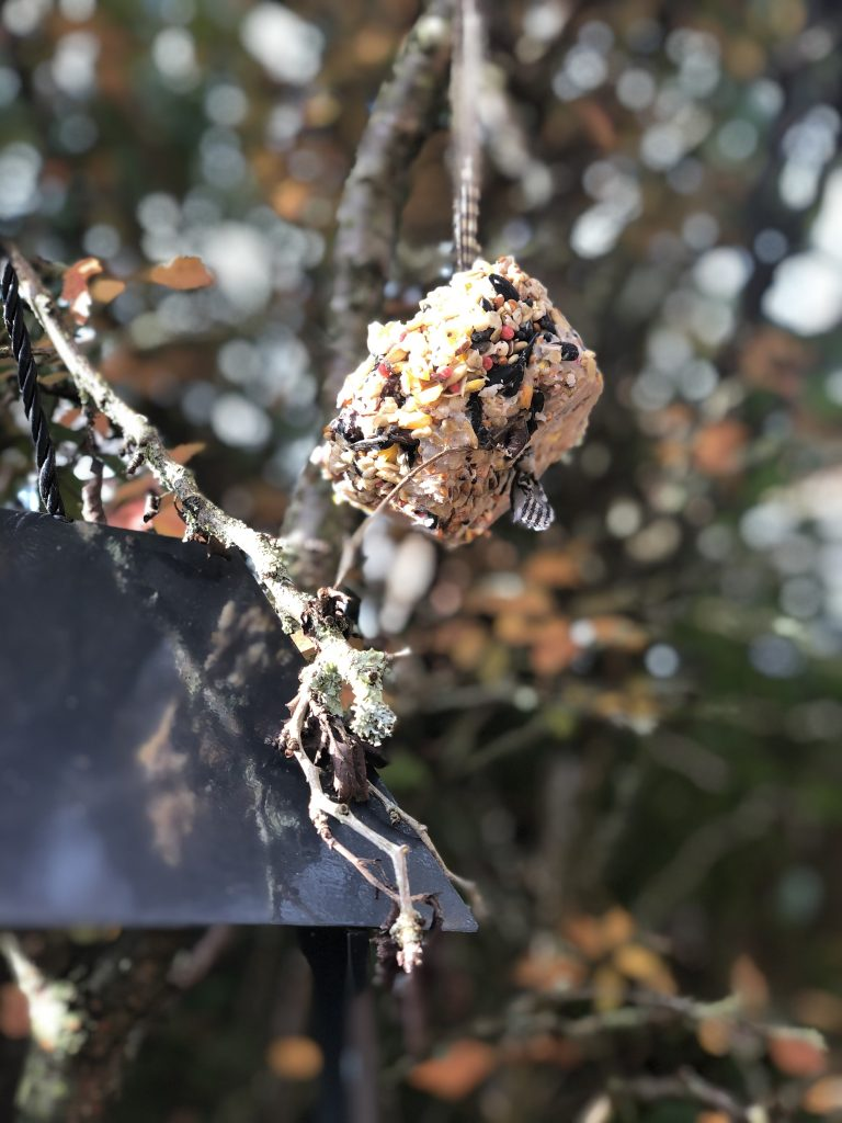 homemade fat ball for birds hanging from bare branches