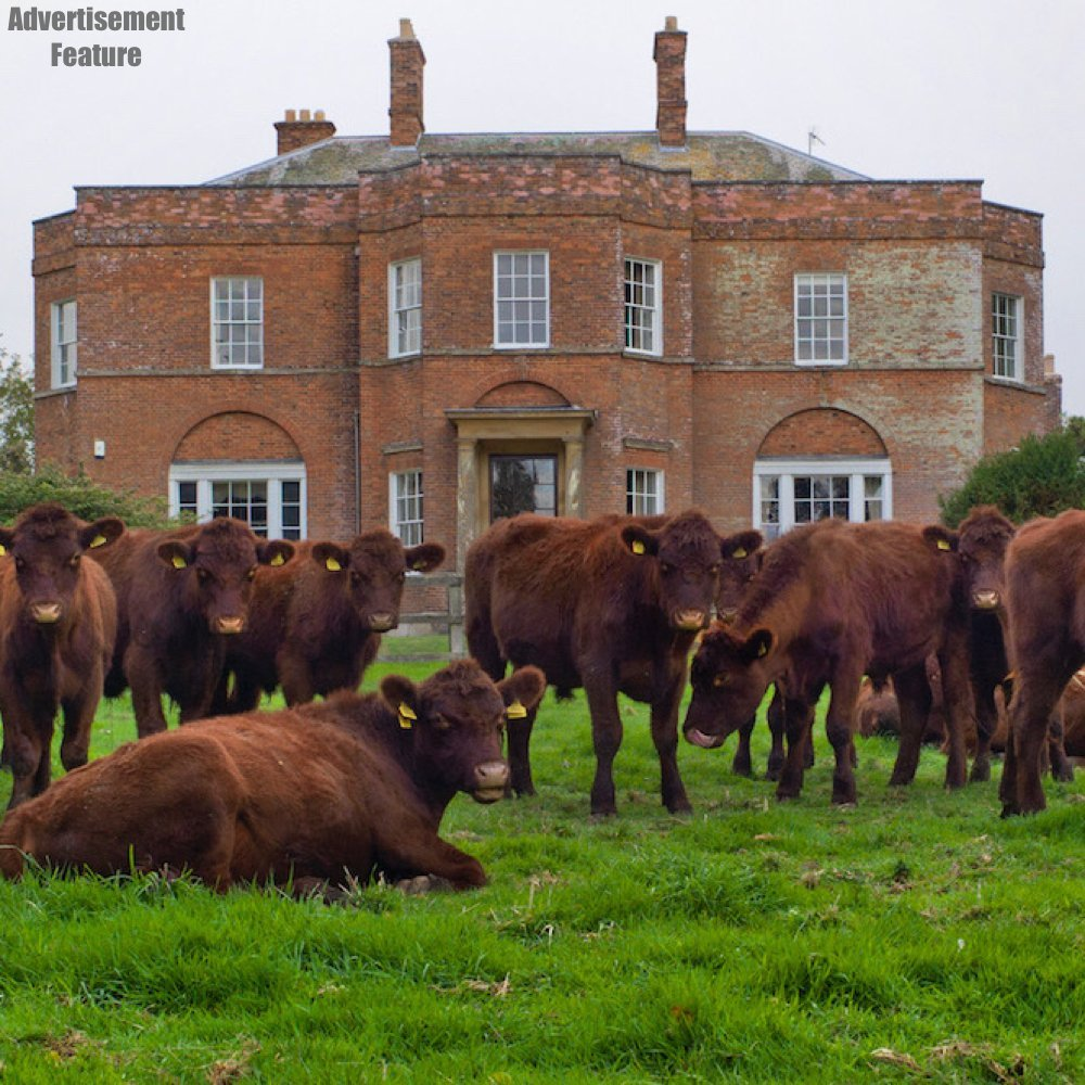 south ormsby estate house with cattle surrounding the front of the house