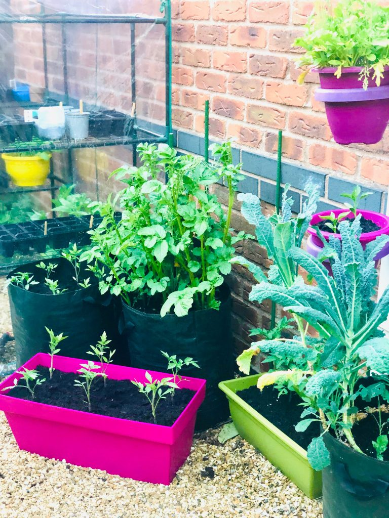 self care idea - grow your own vegetables - container vegetable garden growing tomatoes, potatoes, radishes, kale, chillies, salad, pumpkins and sprouts