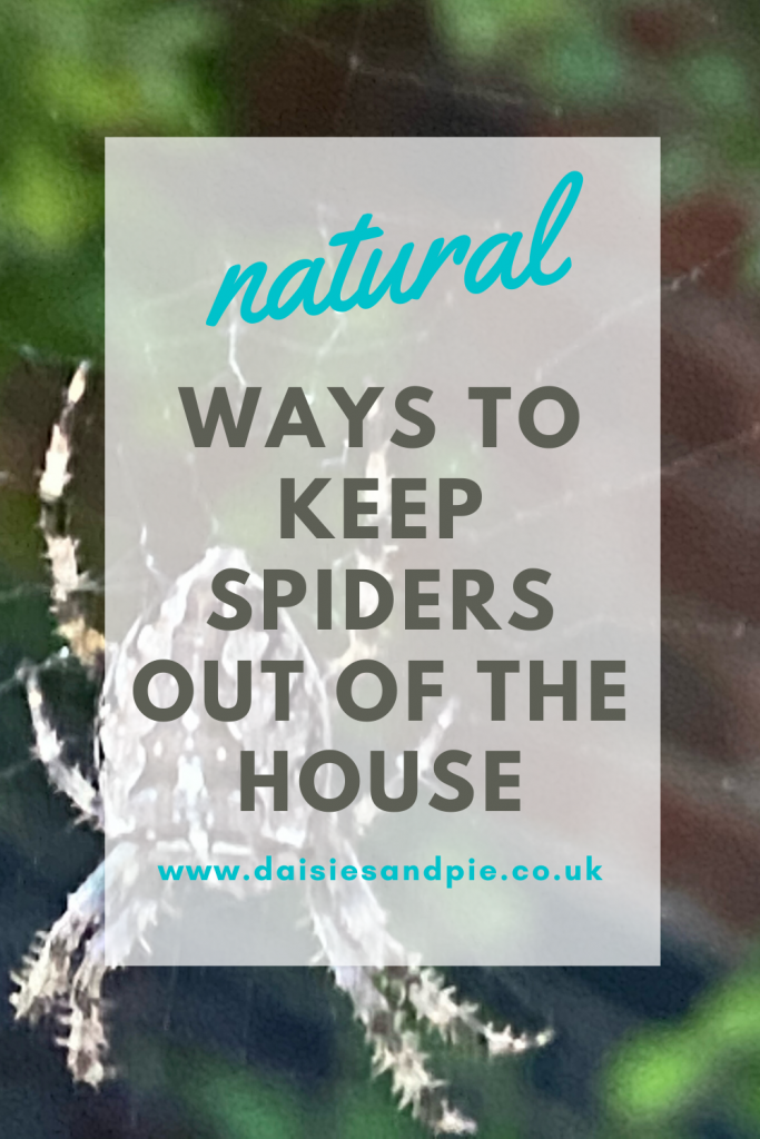 "natural spider deterrent - spider sat on a web. Text ""natural ways to keep spiders out of the house"""